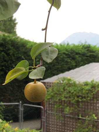 Sechelt, Canada: Fresh fruit