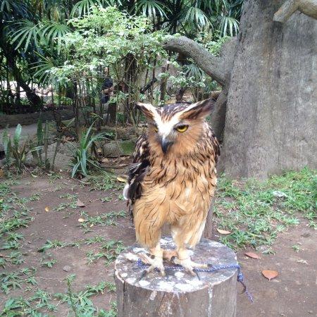 Unduh 56+  Gambar Burung Hantu Ngantuk  Terbaru Free