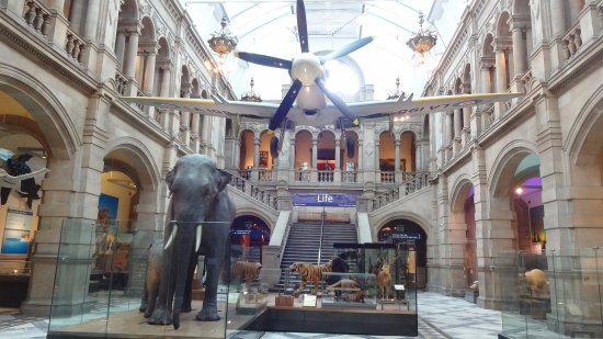 Kelvingrove Art Gallery and Museum: Only one of the halls- plenty more to see
