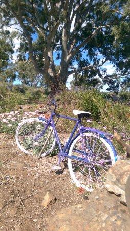 Lavender Farm Lyndoch