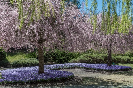 Sutton, Australien: Some of the blossoms at Tulip Top Gardens