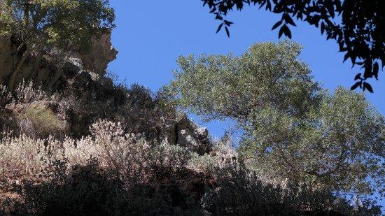Creta, Grecia: SAM_2113_large.jpg