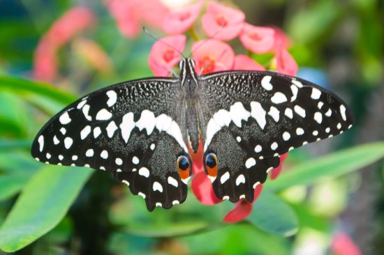 Mombasa Butterfly House