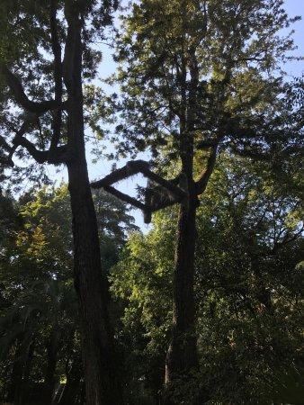 Quinta das Lagrimas: photo7.jpg