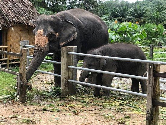 Phang Nga, Thailand: photo2.jpg