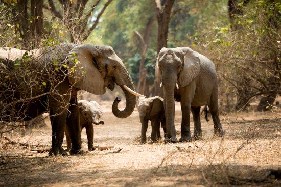 Lower Zambezi National Park, Zambia: Zambezi Grande Safari