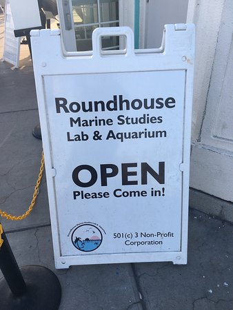 Манхэттен-Бич, Калифорния: Shark skull, dolphin skull, donation box, and hands on opportunities to study sea life