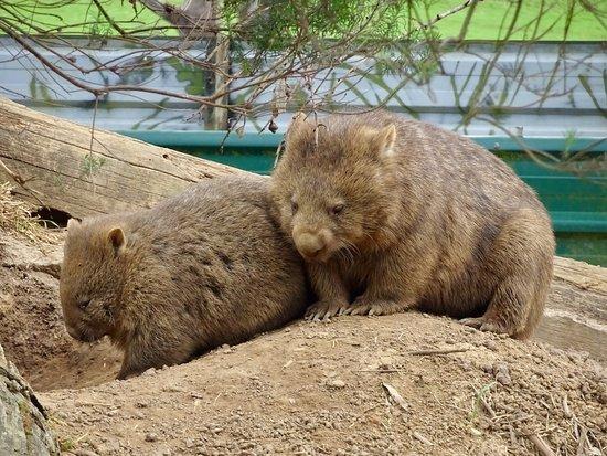Mole Creek, Australia: photo2.jpg