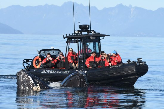 White Rock Sea Tours and Whale Watching