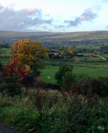 West Witton, UK: View from our walk, close to the Heifer
