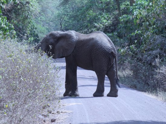 Lake Manyara National Park, Tanzania: Elephant roadblock