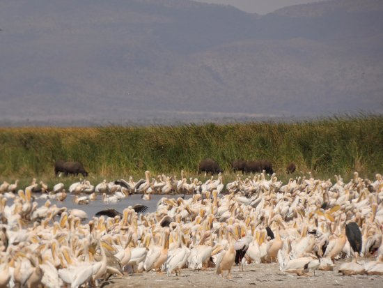 Lake Manyara National Park, Tanzania: Bird pools