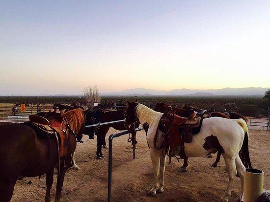 Obraz Yucca