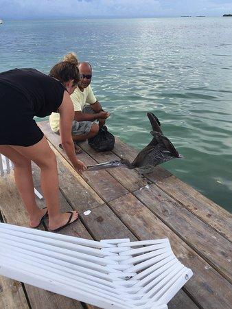 Iguana Reef Inn: photo8.jpg