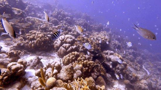 Kralendijk, Bonaire: Reef