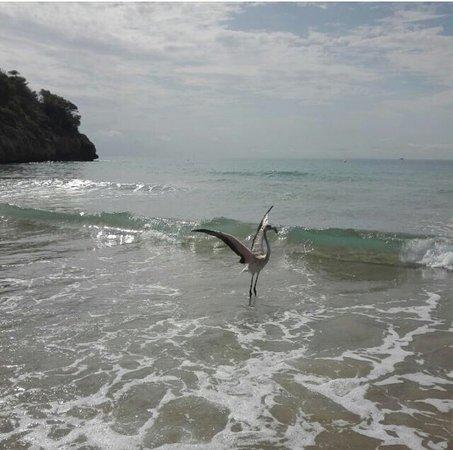 Provincia de Tarragona, España: Playa De La Mora