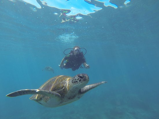 Alcalá, España: Turtles are one of our favorite visitors on our dives!