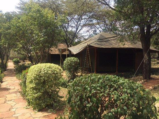 Mara Springs Safari Camp: Tents