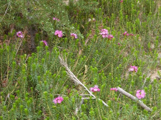 Mineral, كاليفورنيا: Flowers