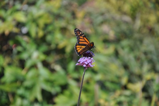 Boothbay, Maine: Another garden resident