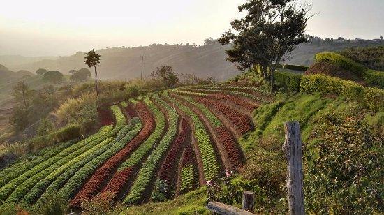Zarcero, Costa Rica: Finca Orgánica Tierra de Sueños