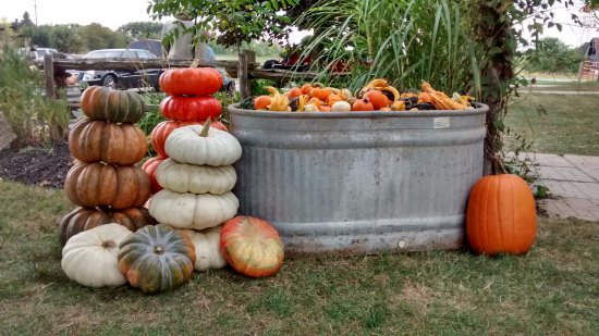 King City, Canadá: Fall farm displays