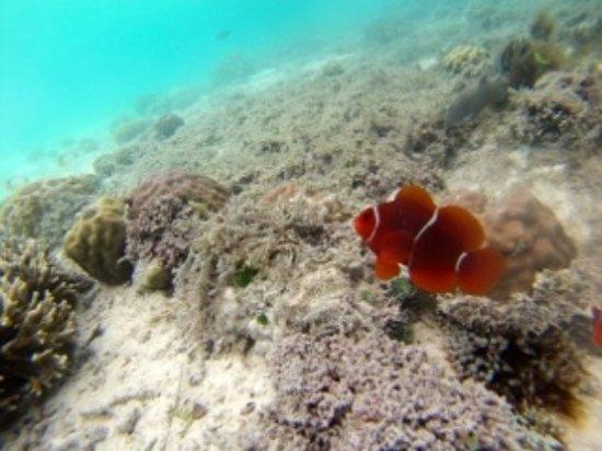 Gizo, Islas Salomón: fatboys coral sea