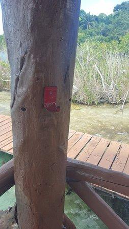 Kuuch Kaanil Villas Eco-romanticas : no hay extinguidores!! donde esta Protección Civil para vigilar esto