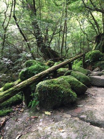 small fall - Picture of Shiratani Unsuikyo Valley, Kumage-gun Yakushima-cho -...
