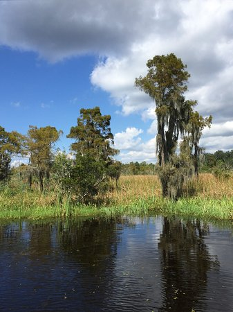 Gray Line Swamp Tour New Orleans La Top Tips Before
