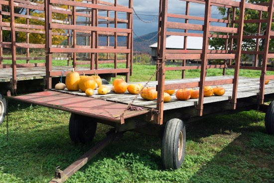 Marshfield, VT: Locally grown pumpkins