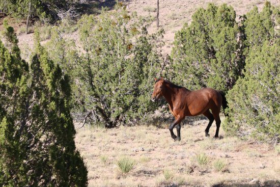 New Mexico Jeep Tours: Tom our guide was relentlees for his search, and was rewarded with this hansome stallion!