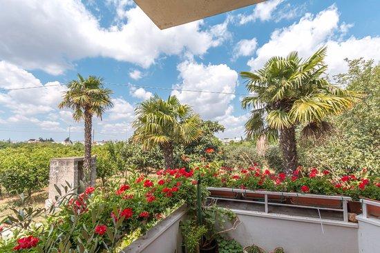Monteroni di Lecce, Italia: Fiori e piante
