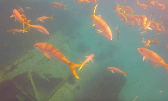 Aqua Marine Dive Center: Ship Wreck Dive