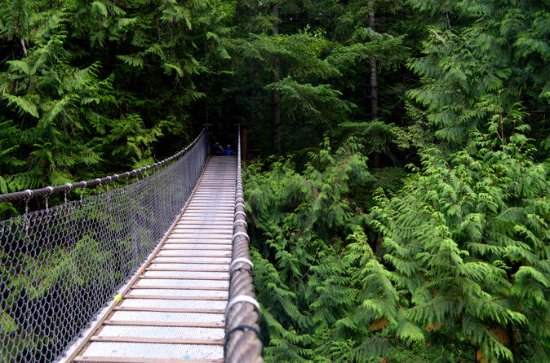 Lynn Canyon Trail and Photography Tour