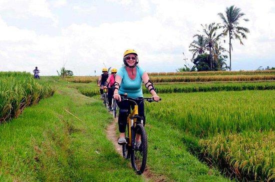 Demi-journée sur le riz et le village...