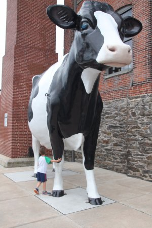 Columbia, PA: Biggest cow ever