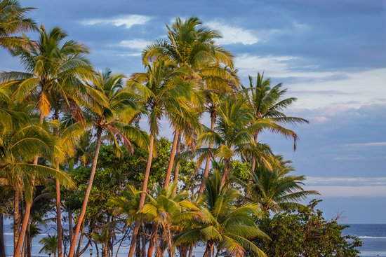 Outrigger Fiji Beach Resort: Palm Trees at sunset - view from Deluxe Ocean View room