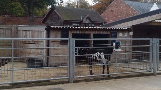 Farm Shop Picture Of Wentworth Garden Centre Rotherham Tripadvisor