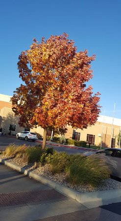 Loveland, CO: Pretty Fall/Autumn Tree Colors! Photo Taken on Oct. 6th, 2017