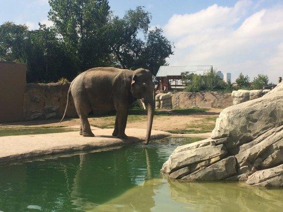 Denver Zoo: amazing elephant