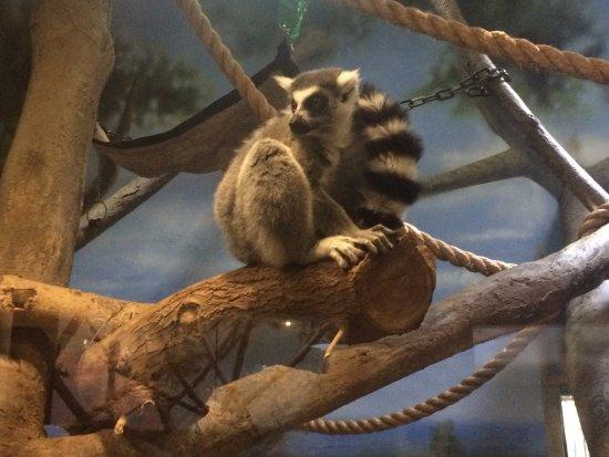 Denver Zoo: mauriceeeeeeee!!!