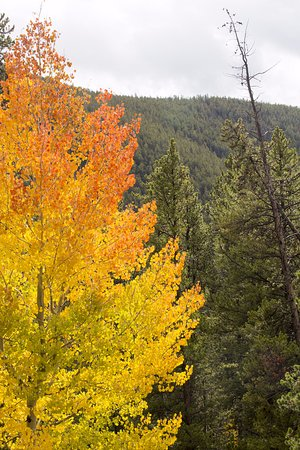 Fall colours at Monarch Pass