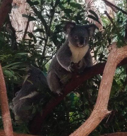 Currumbin, Australia: PSX_20171012_173218_large.jpg