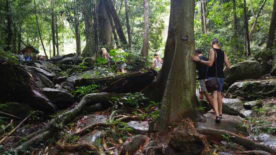 Pala-U Waterfall : Walking through the forest/jungle