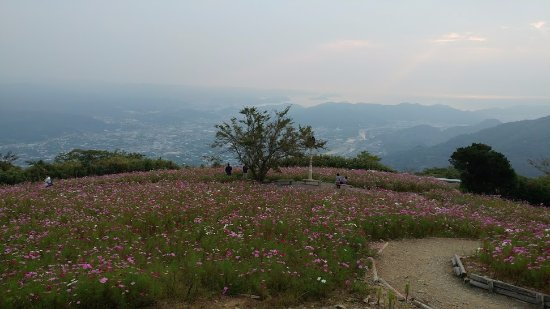 Aridagawa-cho, Japon : コスモス園全景