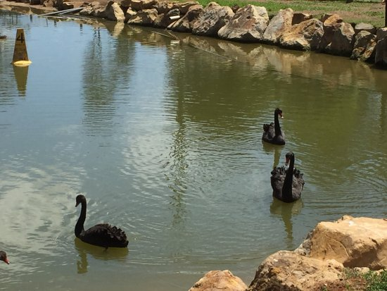 Nulkaba, Austrália: photo5.jpg