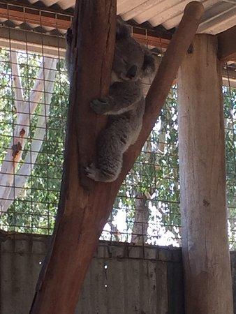 Nulkaba, Australia: photo8.jpg