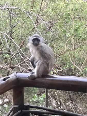 Madikwe Game Reserve, South Africa: photo2.jpg