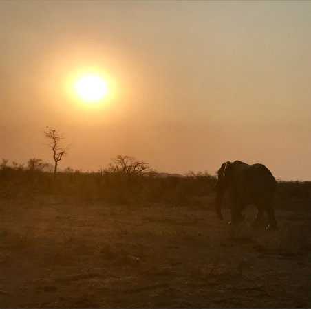 Madikwe Game Reserve, South Africa: photo6.jpg